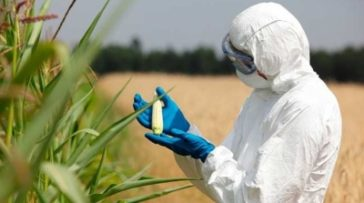 GM foods: the need for tightening the EU rules