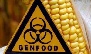Walmart and Corn Rootworm choose for Monsanto's gm-corn