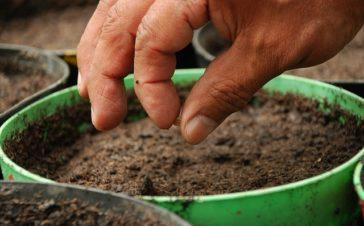 Kritiek op voorstel Europese Commissie voor zadenwetgeving