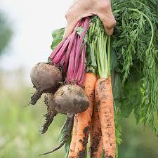 groentjes