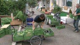 De strategie van de kromme komkommers