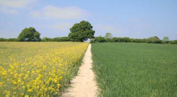 Juridisch dossier toont mazen in Europese GMO wet- en regelgeving