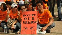Trade deals criminalise farmers' seeds