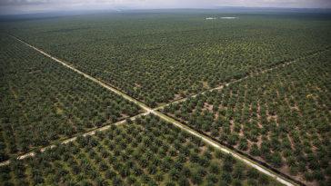 Onderzoek zet grote vraagtekens bij certificering 'duurzame' palmolie