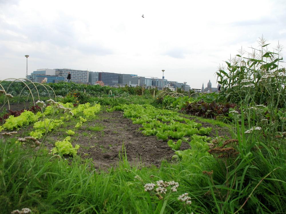 2015-onthullingtuinbordje-tuinmetuitzicht-1000