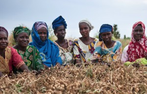 Seed Saving in Nigeria