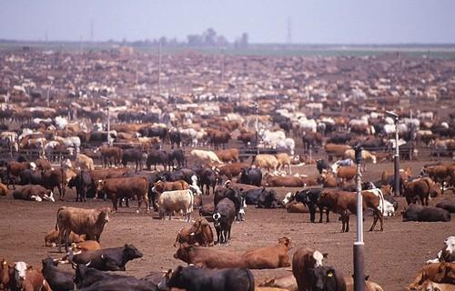 Confined Animal Feeding Operation