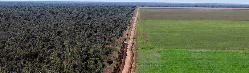 Deforested Region of the Cerrado | ASEED