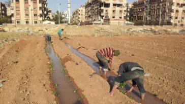 """""""Ze probeerden ons te begraven, maar ze wisten niet dat we zaden waren"""""""