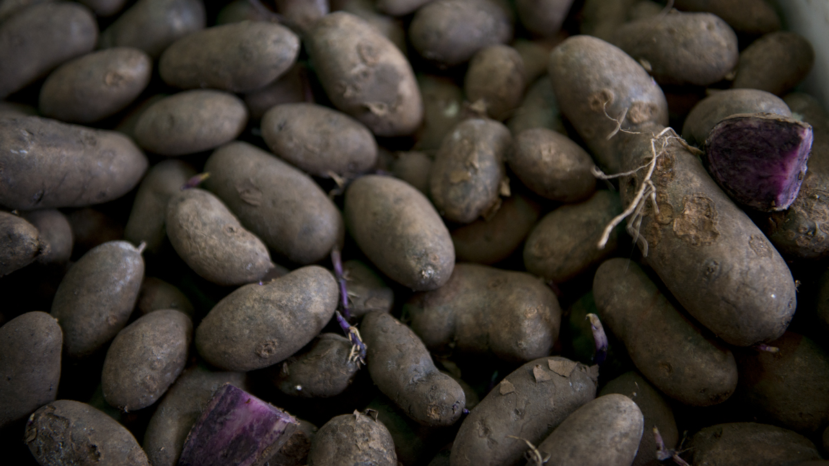 Picture of purple potatoes