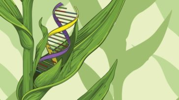 ECJ ruling on gene editing products: Victory for consumers, farmers, environment