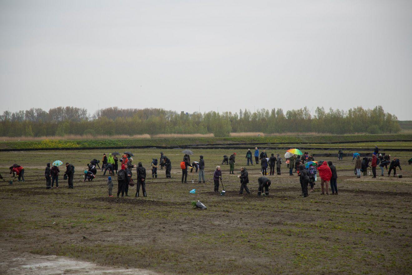 People sowing seeds in the Lutkemeerpolder